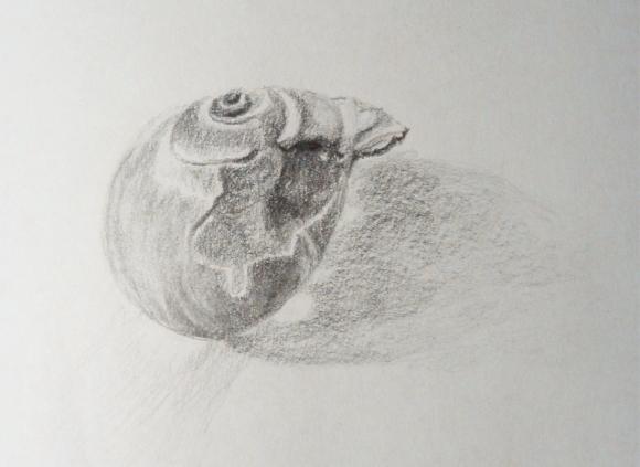 Seashella