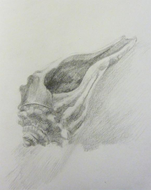 Seashellb
